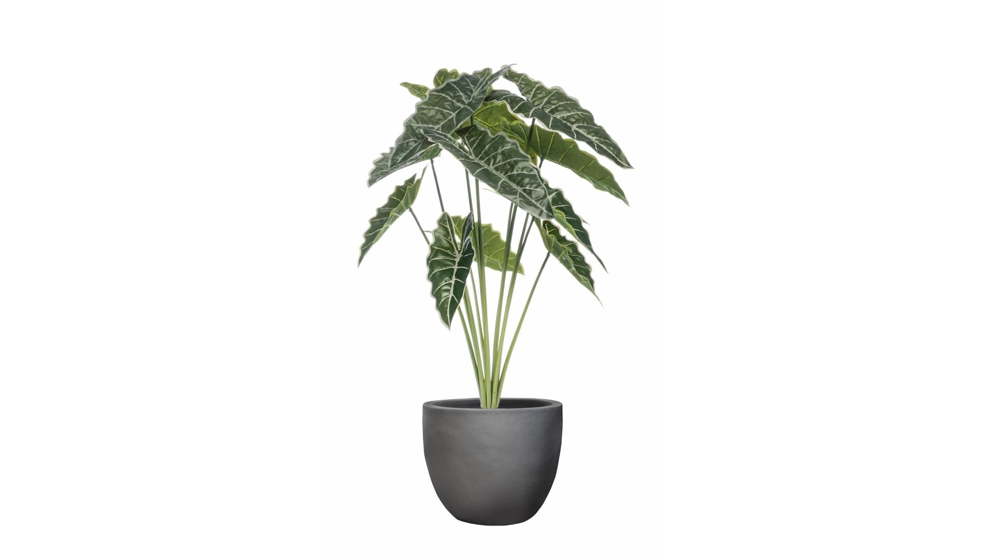 CJ Decor plantas,CJ Decor arvores,CJ Decor floresCJ Decor verde