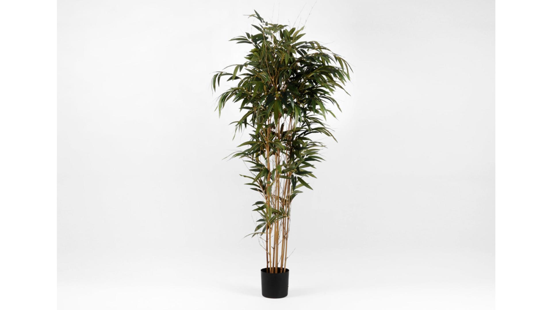 CJ Decor Bamboo
